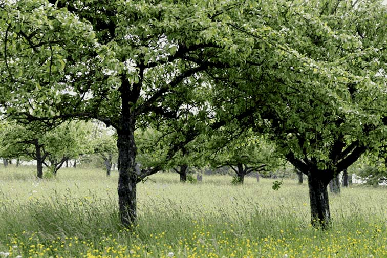 borgo-boomgaard